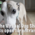 Virtual Dog Show is open for entries!!